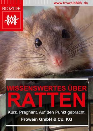 Wissenswertes über Ratten