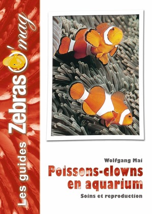 Poissons-clowns en aquarium