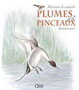 Plumes & pinceaux