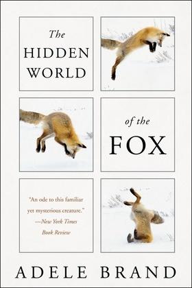 The Hidden World of the Fox