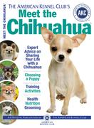 Meet the Chihuahua