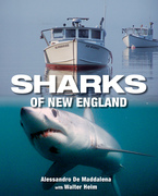 Sharks of New England