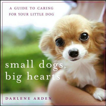 Small Dogs, Big Hearts: A Guide to Caring for Your Little Dog