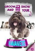 Groom & Show your Havanese