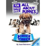 All About Border Terrier Puppies