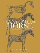 The Anatomy of the Horse