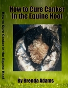 How to Cure Canker in the Equine Hoof