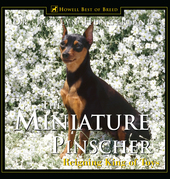 Miniature Pinscher: Reigning King of Toys