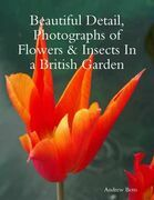 Beautiful Detail, Photographs of Flowers & Insects In a British Garden