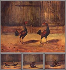 The Breeding and Management of Fighting Cocks