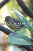 Diseases of Canaries