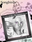 Songbirds:  Antea Camena