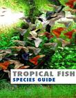 Tropical Fish Species Guide