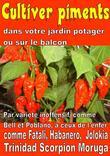 Cultiver piments dans votre jardin potager ou sur le balcon (epub)