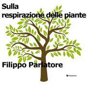 Sulla respirazione delle piante