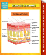 Surface Anatomy Speedy Study Guides