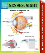 Senses: Sight Speedy Study Guides