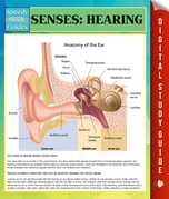 Senses: Hearing Speedy Study Guides