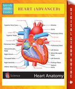 Heart (Advanced) Speedy Study Guides