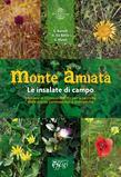 Monte Amiata, le insalate di campo