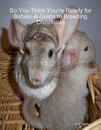 So You Think You're Ready for Babies - A Guide to Breeding Chinchillas