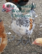 The Beautiful World of Chickens
