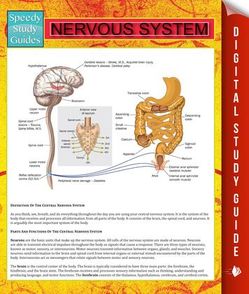 Nervous System: Speedy Study Guides