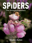 Spiders: The Ultimate Predators