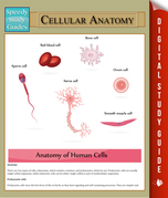 Cellular Anatomy: Speedy Study Guides