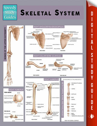 Skeletal System (Speedy Study Guides)