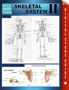 Skeletal System II (Speedy Study Guides)