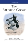 The Barnacle Goose