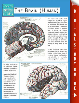 The Brain (Human) (Speedy Study Guides)