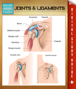 Joints & Ligaments: Speedy Study Guides