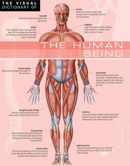 The Visual Dictionary of The Human Being
