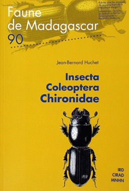 Insecta Coleoptera Chironidae