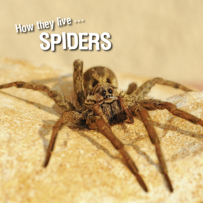 How they live... Spiders