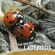 How they live... Ladybirds