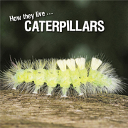 How they live... Caterpillars