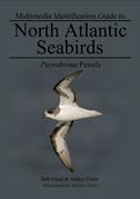 Pterodroma Petrels: North Atlantic Seabirds