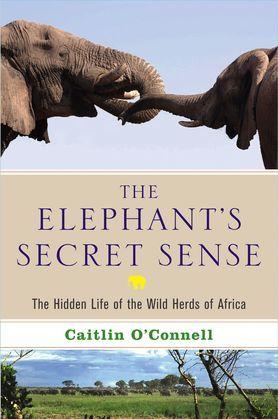 The Elephant's Secret Sense