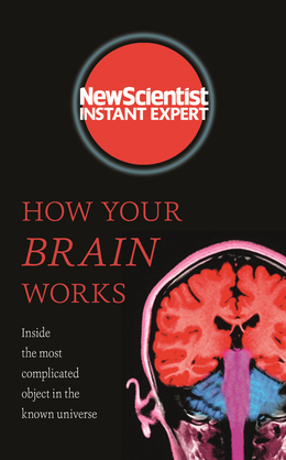 How Your Brain Works