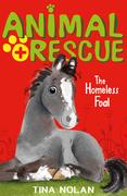 The Homeless Foal