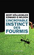 L'incroyable instinct des fourmis