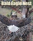 Bald Eagle Nest: A Story of Survival in Photos