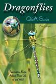 Dragonflies: Q&A Guide: Fascinating Facts About Their Life in the Wild