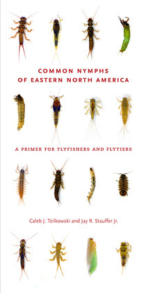 Common Nymphs of Eastern North America