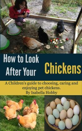 How to look after your Chickens