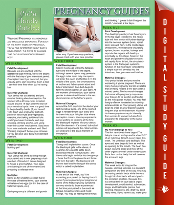 Pregnancy Guides: Stages of Pregnancy Development