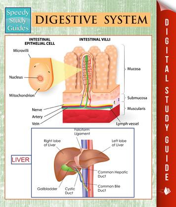 Digestive System (Speedy Study Guides)